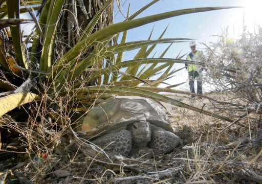 Shale Gas - solar impacts turtles