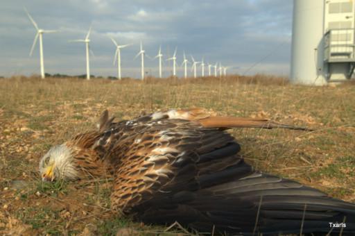 migratory bird treaty